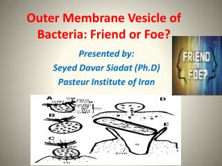 Outer Membrane Vesicle of Bacteria: Friend or Foe?