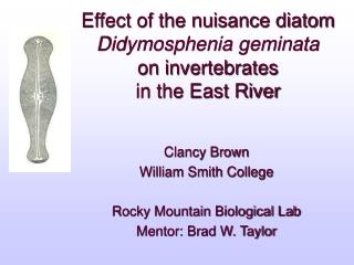 Effect of the nuisance diatom  Didymosphenia geminata on invertebrates  in the East River