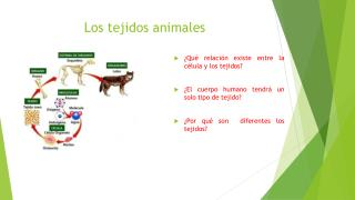 Los tejidos animales