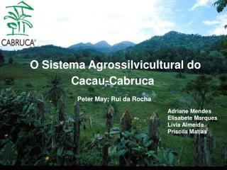 O Sistema Agrossilvicultural do
