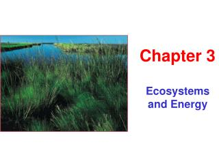 Ecosystems and Energy