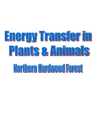 Energy Transfer in  Plants & Animals
