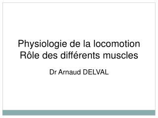Physiologie de la locomotion Rôle des différents muscles