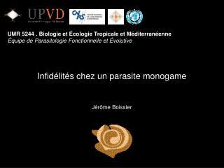 Infidélités chez un parasite monogame