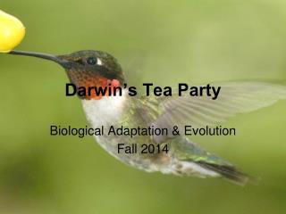 Darwin's Tea Party