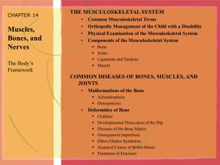 CHAPTER 14  Muscles,  Bones, and Nerves  The Body s Framework