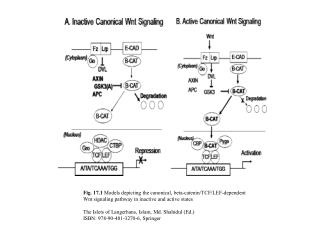 Fig. 17.2  Models depicting noncanonical beta-catenin-independent Wnt signaling pathways
