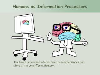 The brain processes information from experiences and stores it in Long-Term Memory.