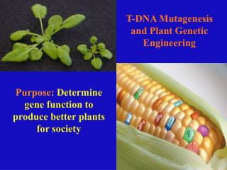 T-DNA Mutagenesis and Plant Genetic Engineering