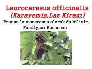 Laurocerasus officinalis (Karayemiş,Laz Kirazı)