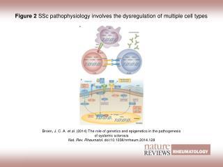 Figure 2  SSc pathophysiology involves the dysregulation of multiple cell types