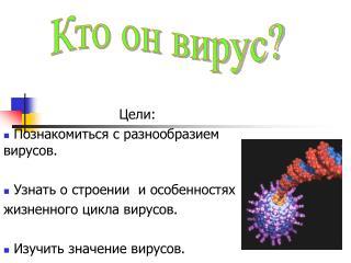 Цели:  Познакомиться с разнообразием вирусов.  Узнать о строении  и особенностях