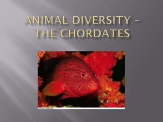 Animal diversity –  the chordates