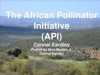 The African Pollinator Initiative (API) Connal Eardley Photos by Dino Martins &  Connal Eardley