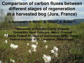 Peatlands : carbon sinks