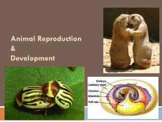 Animal Reproduction & Development