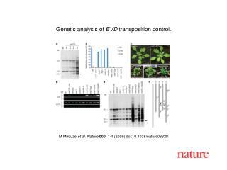 M Mirouze  et al. Nature 000 ,  1 - 4  (2009) doi:10.1038/nature08 328