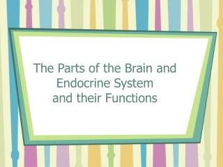 The Parts of the Brain and Endocrine System and their Functions