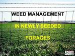 WEED MANAGEMENT  IN NEWLY SEEDED   FORAGES