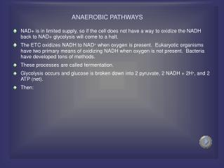 ANAEROBIC PATHWAYS