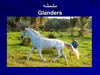 مشمشه Glanders