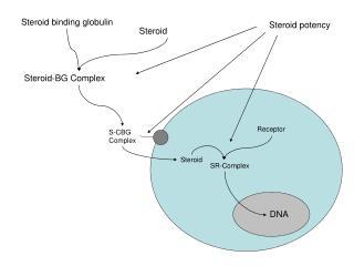 Steroid binding globulin