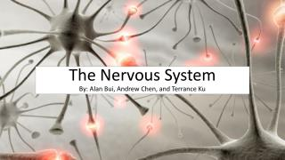 The Nervous System By: Alan Bui, Andrew Chen, and Terrance Ku