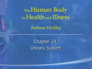 Chapter 24: Urinary System