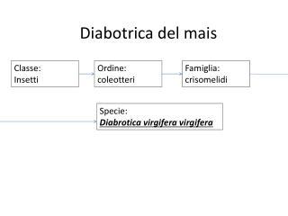 Classe:  Insetti