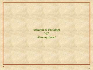 Anatomi & Fysiologi VII Nervesystemet