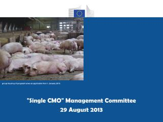 """ Single CMO ""  Management Committee 29 August 2013"