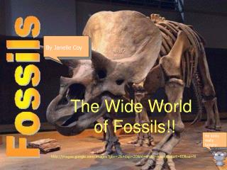 The Wide World      of Fossils!!