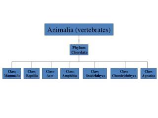Animalia (vertebrates)