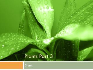 Plants Part 3