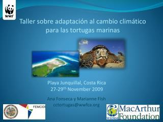 Taller sobre adaptación al cambio climático para las tortugas marinas