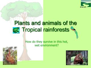 Plants and animals of the Tropical rainforests