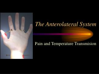 The Anterolateral System