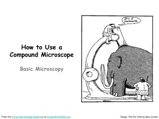 How to Use a Compound Microscope Basic Microscopy