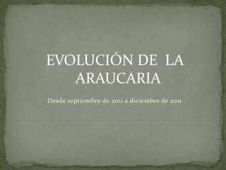 EVOLUCIÓN  DE   LA ARAUCARIA