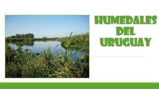 HUMEDALES DEL URUGUAY