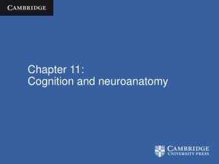 Chapter 11: Cognition and neuroanatomy