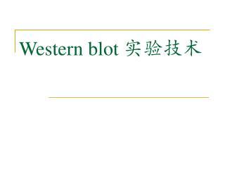 Western blot  实验技术