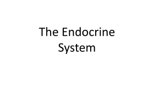 THE ENDOCRINE PANCREAS AND THE CONTROL OF BLOOD GLUCOSE