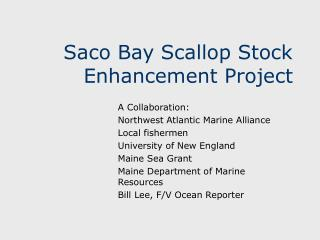 Saco Bay Scallop Stock Enhancement Project