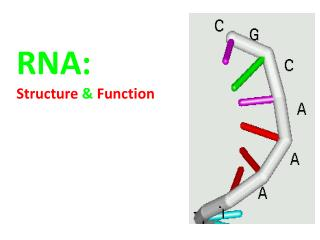 RNA: Structure  &  Function