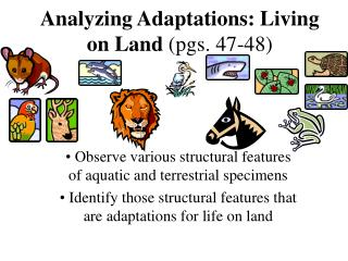 Analyzing Adaptations: Living on Land  (pgs. 47-48)