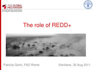 The role of REDD+
