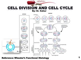 Cell Division and Cell Cycle