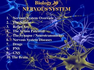 Biology 30 NERVOUS SYSTEM 	1.     Nervous System Overview 	2.    The Neuron 	3.    Reflex Arc
