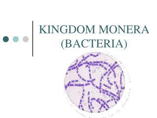 KINGDOM MONERA (BACTERIA)